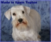Ch. Made in Spain Topten